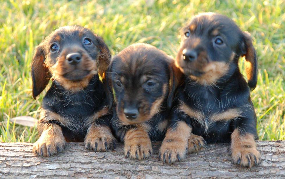 Los Perros Mas Lindos Del Mundo