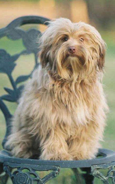 Raza Peque 241 O Perro Le 243 N Fotos De Perros Peque 241 O Perro Le 243 N