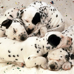 Cualquier Raza De Perros Mascotas Taringa