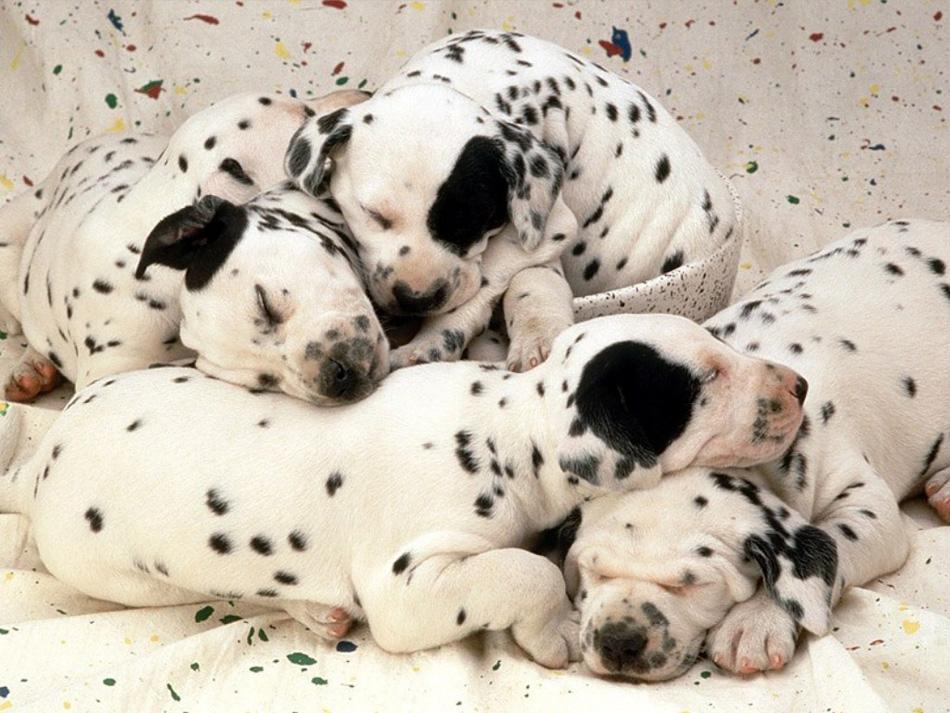 http://www.101razasdeperros.com/images/razas-perros.jpg